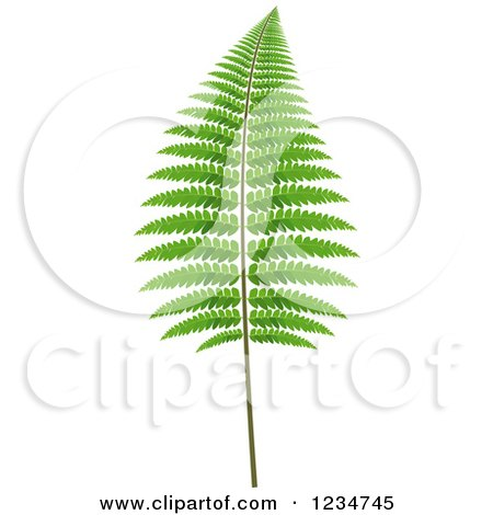 Clipart of a Fern Branch - Royalty Free Vector Illustration by dero