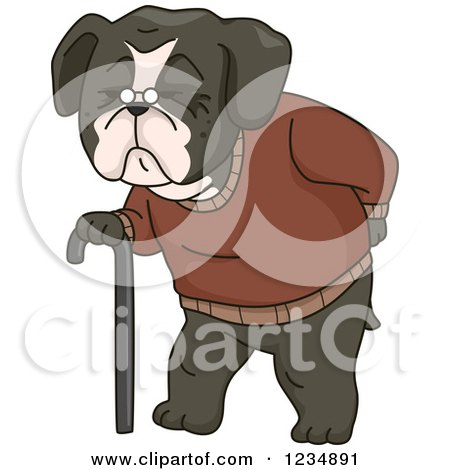 Clipart of an Old Boston Terrir Dog Walking with a Cane - Royalty Free Vector Illustration by BNP Design Studio