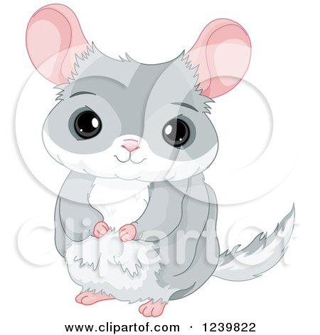 Cartoon Of A Black And White And Colored Cute Chinchilla