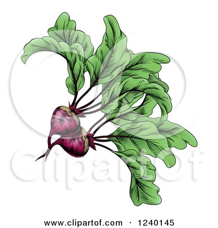 Engraved Beets and Greens Posters, Art Prints