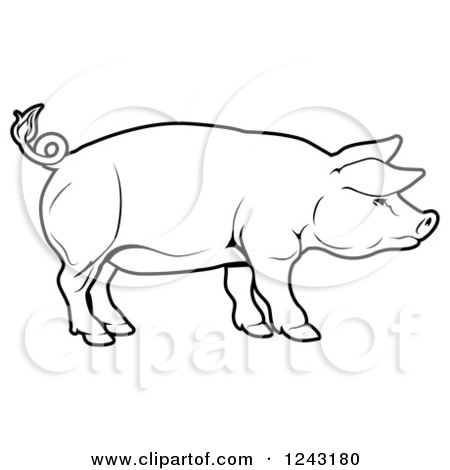 Clipart of a Black and White Pig in Profile - Royalty Free ...