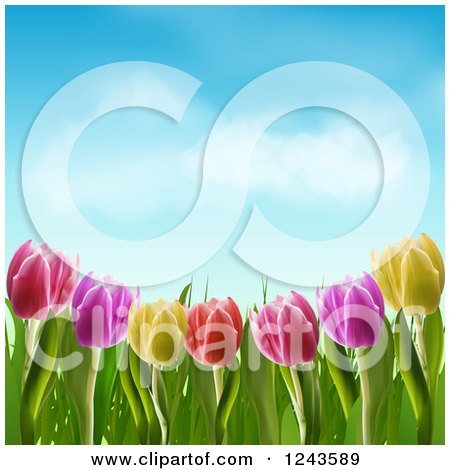 Clipart of Colorful Spring Tulip Flowers Under a Blue Sky with Puffy Clouds - Royalty Free Vector Illustration by elaineitalia
