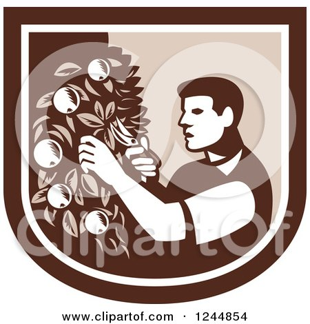 Clipart of a Retro Woodcut Farmer Pruning Apple Trees in a Shield - Royalty Free Vector Illustration by patrimonio