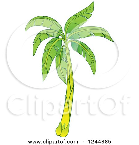 Clipart of a Green Banana Tree - Royalty Free Vector Illustration by Zooco