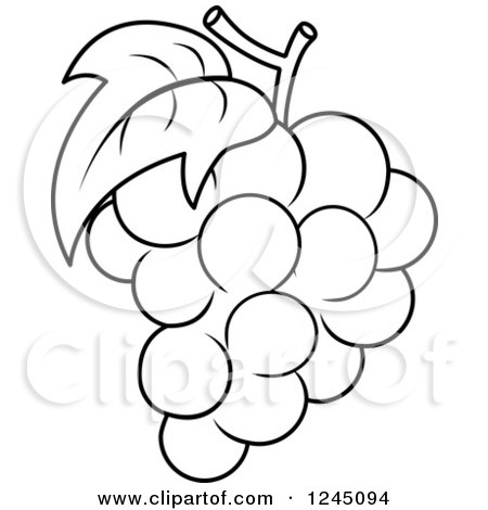 grapes clipart black and white. clipart of a black and white bunch grapes - royalty free vector illustration by bnp design studio d