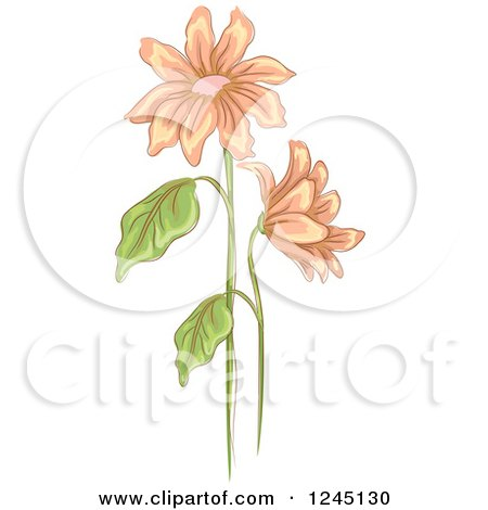 Clipart of Peach Daisy Flowers - Royalty Free Vector Illustration by BNP Design Studio