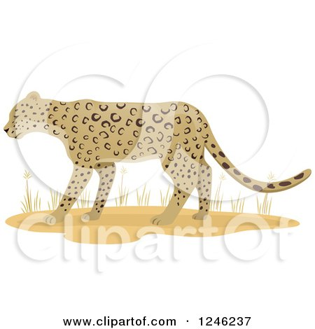 Clipart of a Leopard Big Cat and Grasses - Royalty Free Vector Illustration by BNP Design Studio
