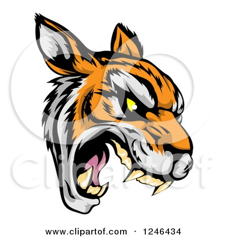 Clipart of a Roaring Aggressive Tiger Mascot Head - Royalty Free Vector Illustration by AtStockIllustration