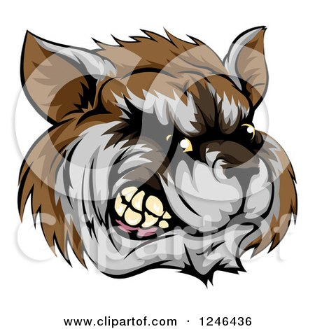 Clipart of a Snarling Aggressive Raccoon Mascot Head - Royalty Free Vector Illustration by AtStockIllustration