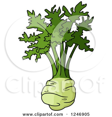 Clipart of a Kohlrabi - Royalty Free Vector Illustration by Vector Tradition SM