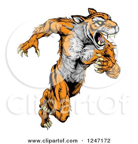 Clipart of a Fierce Muscular Running Tiger Mascot - Royalty Free Vector Illustration by AtStockIllustration