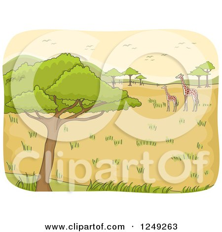 Clipart of a Safari Landscape with Giraffes and Birds - Royalty Free Vector Illustration by BNP Design Studio