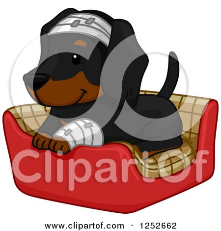 Clipart of a Cute Dachshund Dog Bandaged up and Resting in a Bed - Royalty Free Vector Illustration by BNP Design Studio
