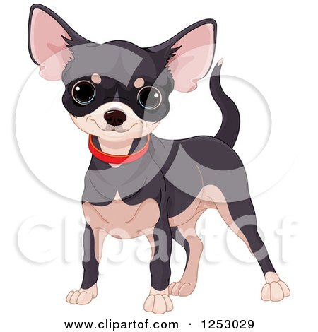 Clipart of a Cute Black and Tan Chihuahua in a Red Collar - Royalty Free Vector Illustration by Pushkin