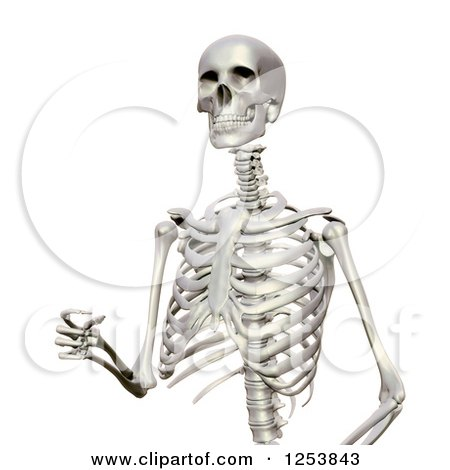 clipart of a 3d human skeleton walking - royalty free illustration, Skeleton