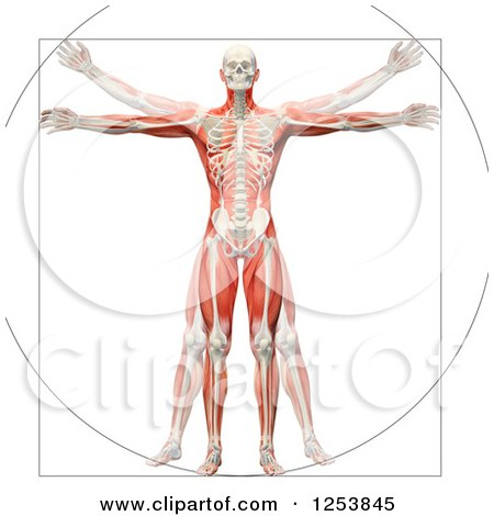 Clipart Of A 3d Vitruvian Man With Visible Skeleton And Muscles