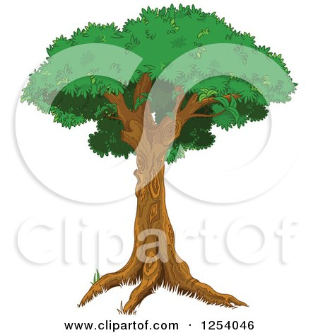 Clipart of a Tree with a Tall Trunk and Lush Canopy - Royalty Free Vector Illustration by Pushkin