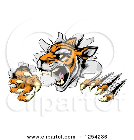 Clipart of a Snarling Tiger Mascot Breaking Through a Wall - Royalty Free Vector Illustration by AtStockIllustration