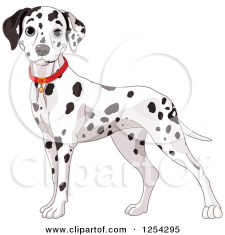 Clipart of a Cute Dalmatian Dog Wearing a Red Collar - Royalty Free Vector Illustration by Pushkin