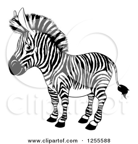 Clipart of a Black and White Zebra - Royalty Free Vector Illustration by AtStockIllustration
