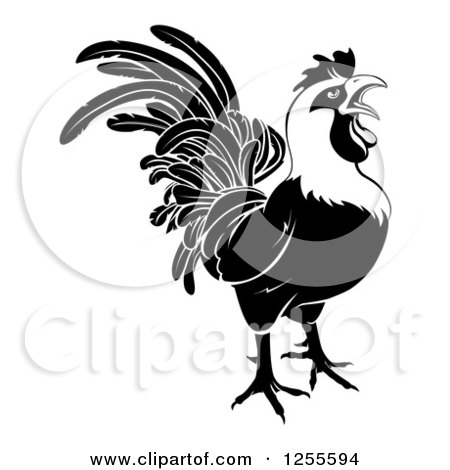 Clipart of a Black and White Rooster Crowing - Royalty Free Vector Illustration by AtStockIllustration