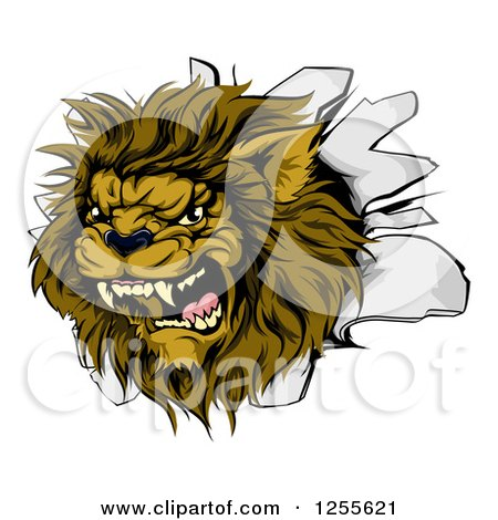 Clipart of a Roaring Lion Mascot Head Breaking Through a Wall - Royalty Free Vector Illustration by AtStockIllustration