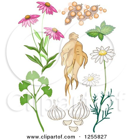 Clipart of a Herbal Plants - Royalty Free Vector Illustration by BNP Design Studio