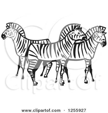 Clipart of a Black and White Woodcut Group of Zebras - Royalty Free Vector Illustration by xunantunich