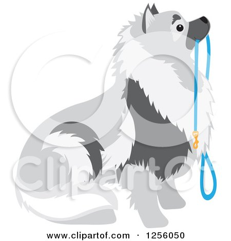 Clipart of a Cute Keeshond Dog Sitting with a Leash - Royalty Free Vector Illustration by Maria Bell