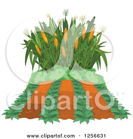 Clipart of a Crop and Corn Maze - Royalty Free Vector Illustration by Pushkin