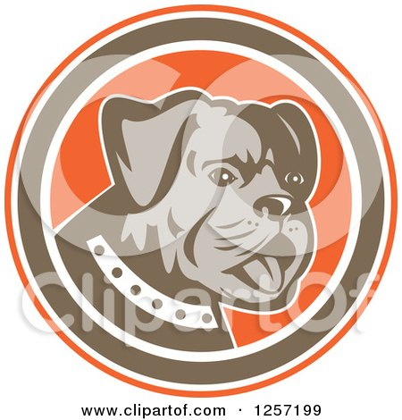 Clipart of a Retro Cute Bulldog in an Orange Brown and White Circle - Royalty Free Vector Illustration by patrimonio