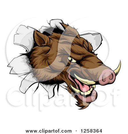 Clipart of an Aggressive Boar Mascot Breaking Through a Wall - Royalty Free Vector Illustration by AtStockIllustration