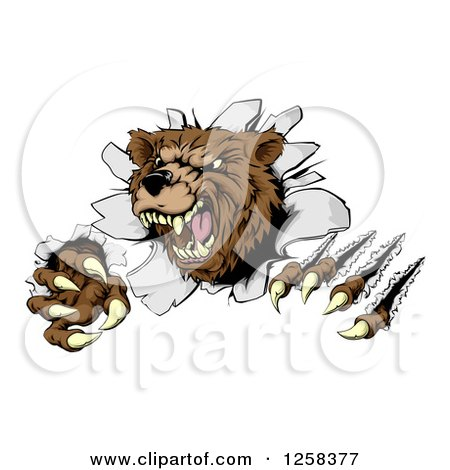 Clipart of a Vicious Aggressive Bear Mascot Slashing Through a Wall - Royalty Free Vector Illustration by AtStockIllustration