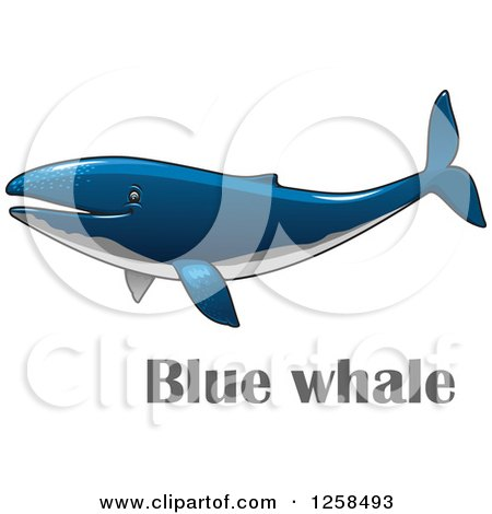 Clipart of a Blue Whale over Text - Royalty Free Vector Illustration by Vector Tradition SM