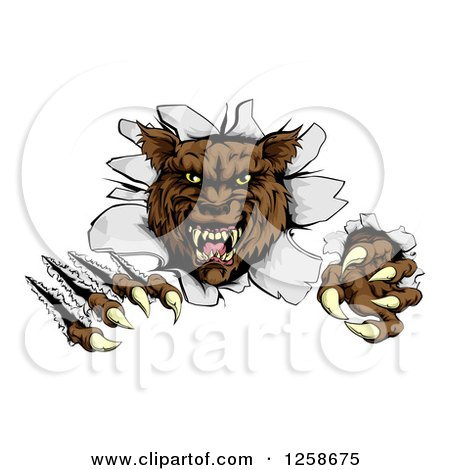 Clipart of a Ferocious Brown Wolf Slashing and Breaking Through a Wall - Royalty Free Vector Illustration by AtStockIllustration