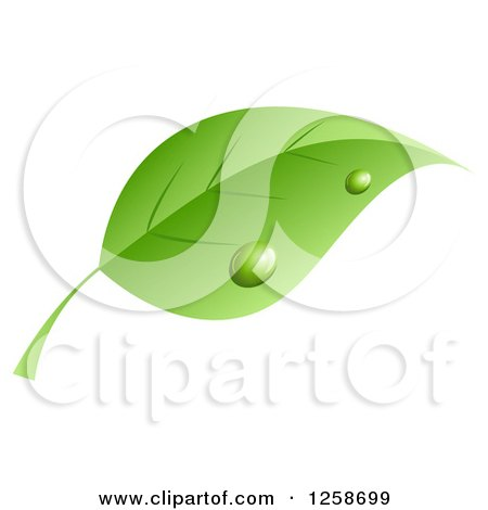 Clipart Of A Dewy Green Leaf - Royalty Free Vector Illustration by KJ Pargeter