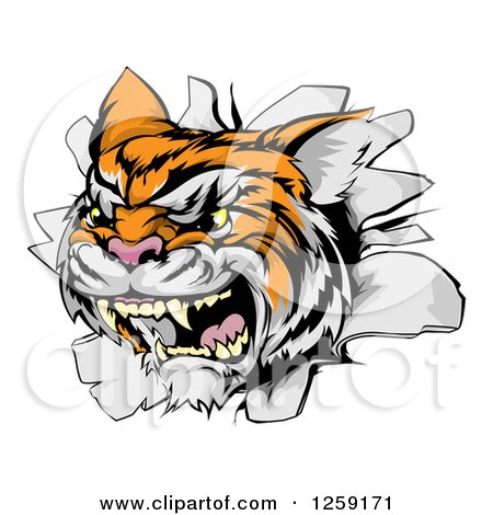 Clipart of a Vicious Tiger Mascot Breaking Through a Wall - Royalty Free Vector Illustration by AtStockIllustration