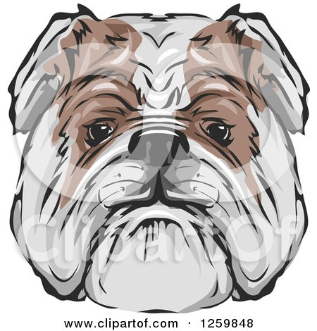 Clipart of a Bulldog Face Mascot - Royalty Free Vector Illustration by BNP Design Studio
