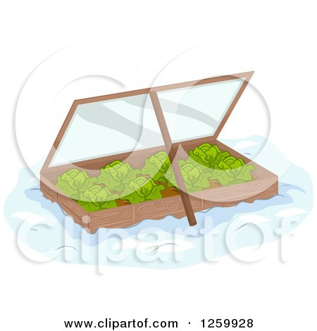 Clipart of a Winter Garden Box of Cabbage - Royalty Free Vector Illustration by BNP Design Studio
