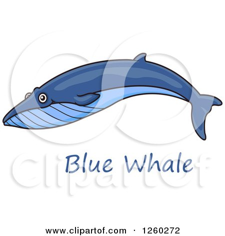 Clipart of a Swimming Blue Whale over Text - Royalty Free Vector Illustration by Vector Tradition SM