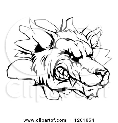Clipart Fierce Saber Tooth Tiger Mascot Head Growling Royalty Free