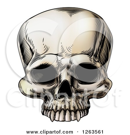 Clipart of a Vintage Human Skull - Royalty Free Vector Illustration by AtStockIllustration