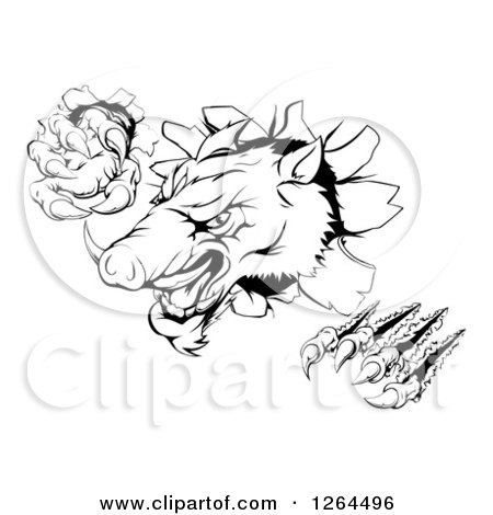 Clipart of a Black and White Aggressive Clawed Boar Mascot Breaking Through a Wall - Royalty Free Vector Illustration by AtStockIllustration