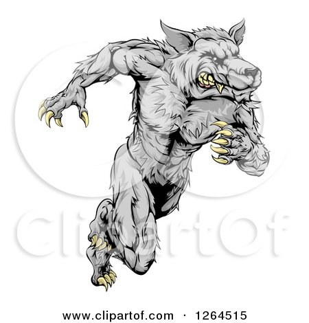 Clipart of a Gray Muscular Wolf Man Sprinting - Royalty Free Vector Illustration by AtStockIllustration