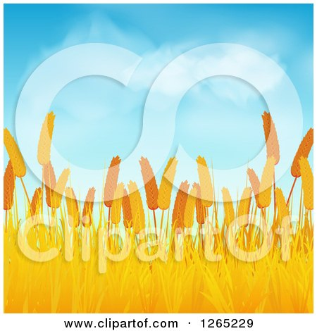 Clipart of a Wheat Field Under a Blue Sky with Fluffy Clouds - Royalty Free Vector Illustration by elaineitalia