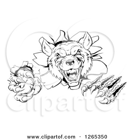 Clipart of a Black and White Ferocious Wolf Slashing and Breaking Through a Wall - Royalty Free Vector Illustration by AtStockIllustration