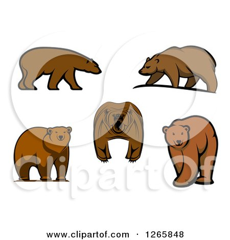 Clipart of Brown Bears - Royalty Free Vector Illustration by Vector Tradition SM