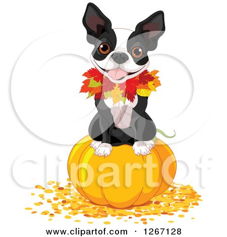 Clipart of a Cute Boston Terrier Dog Sitting on a Thanksgiving or Halloween Pumpkin with Autumn Leaves - Royalty Free Vector Illustration by Pushkin