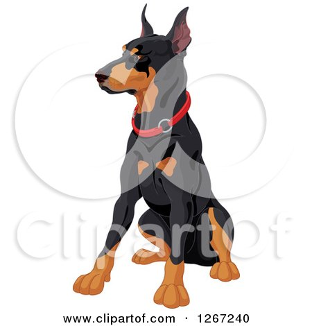 Clipart of a Sitting Alert Doberman Pinscher Dog with a Red Collar - Royalty Free Vector Illustration by Pushkin