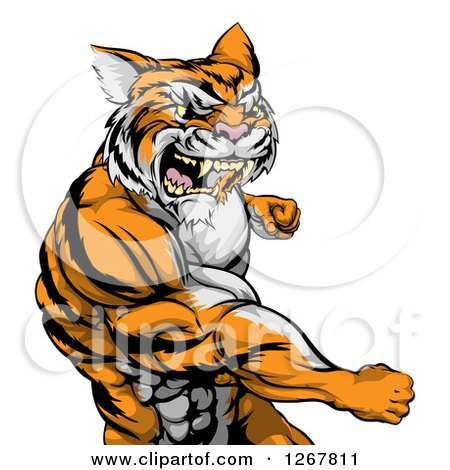Clipart of a Vicious Mad Muscular Tiger Man Punching - Royalty Free Vector Illustration by AtStockIllustration